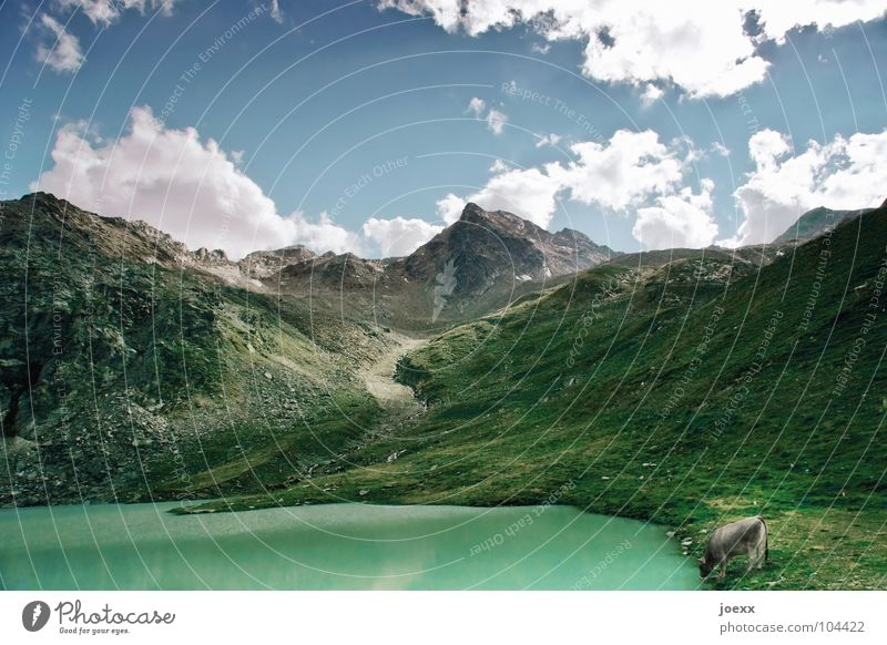 Nature Water Sky Green Clouds Animal Meadow Grass Mountain Happy Lake Drinking Idyll Mammal Glacier Thirst
