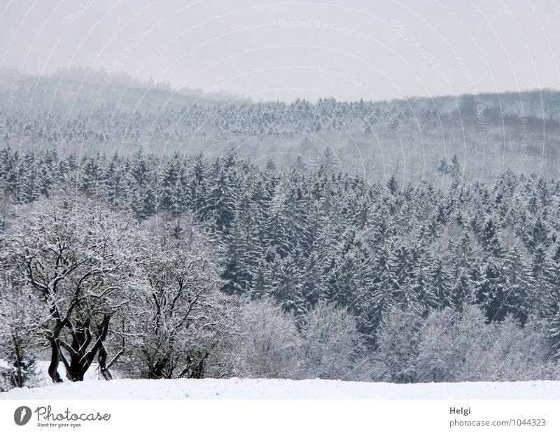 Sky Nature Plant White Tree Loneliness Landscape Calm Winter Black Forest Cold Environment Snow Natural Gray