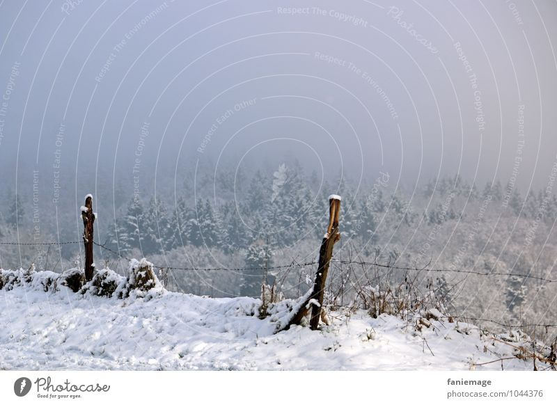 Nature Blue Beautiful White Landscape Winter Forest Cold Snow Gray Snowfall Ice Fog Frost Hill Pasture