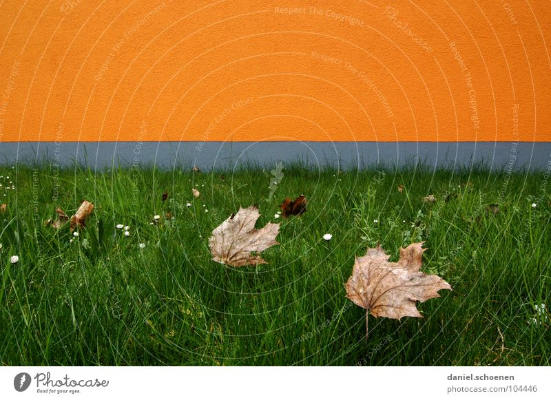 He's at the door. Autumn Leaf Abstract Background picture Facade Graphic Wall (building) Horizon Gray Yellow Green Grass Meadow Brown Seasons Growth Transience