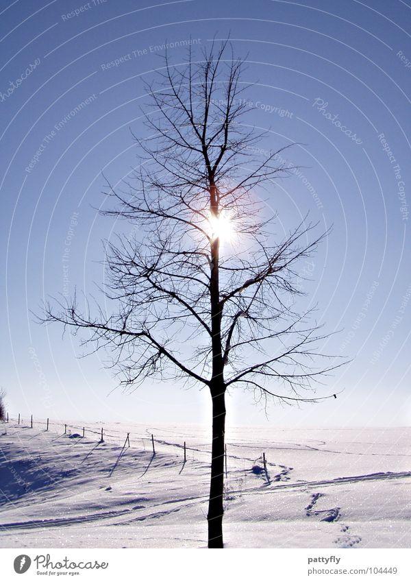 Sky Tree Sun Winter Cold Snow Frost Freeze