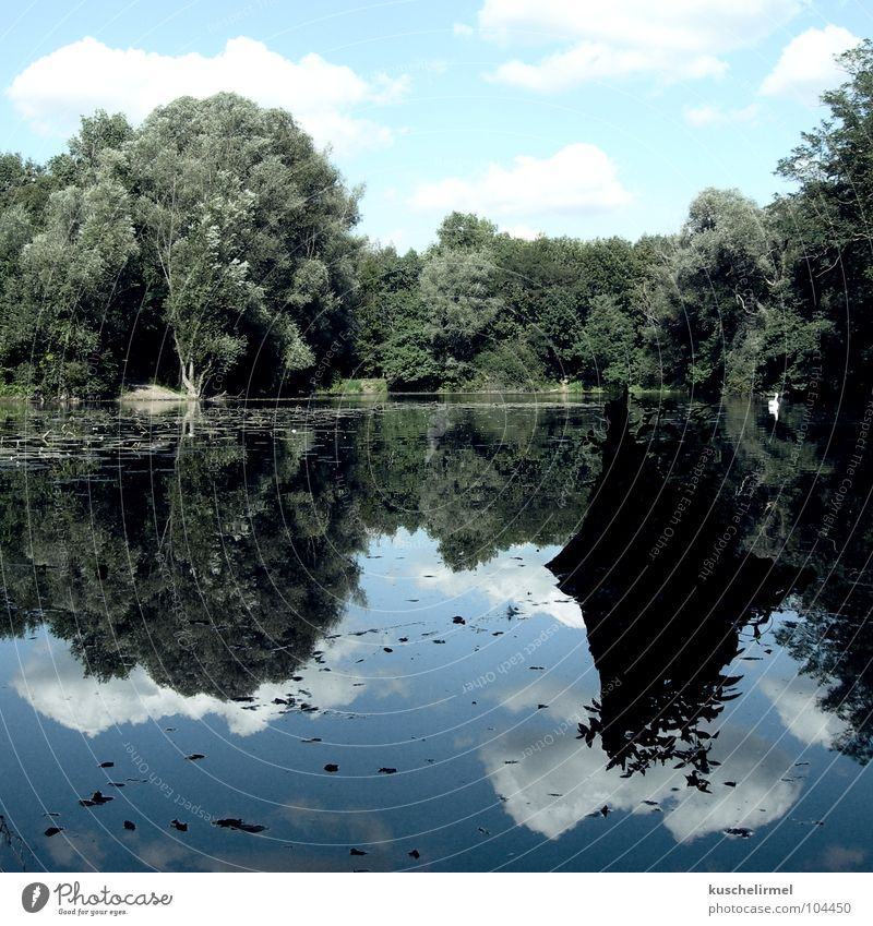 peace of mind Lake Clouds Forest Swan Calm Tree stump Green White Serene Relaxation Dream Dreamland Vacation & Travel Weekend Karlsruhe Leisure and hobbies