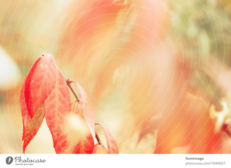 Remembrance of autumn Environment Nature Fire Autumn Wind Bushes Field Forest Beautiful Happy Optimism Warmth Orange Red Blur Autumnal Bright green Pastel tone