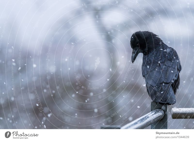 Nature White Animal Winter Far-off places Black Dark Cold Environment Sadness Emotions Snow Natural Exceptional Bird Snowfall