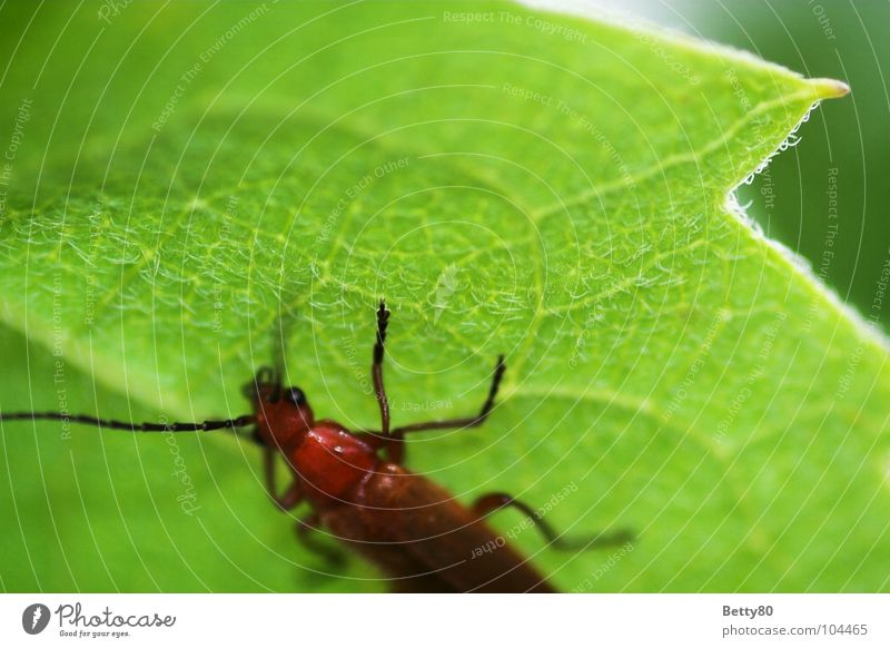Nature Green Plant Summer Spring Break Climbing Insect To feed Beetle Rachis Rest Goof off