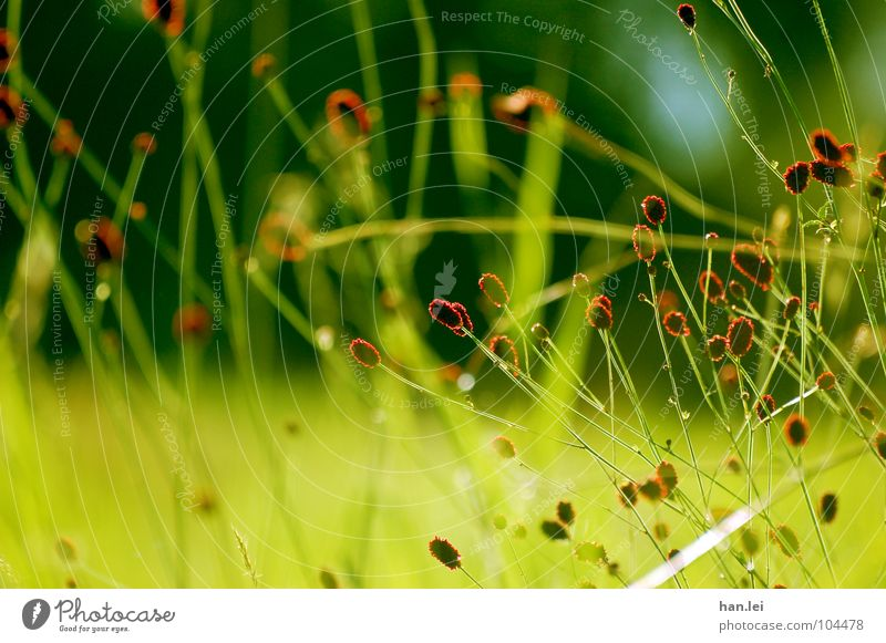 Red Green Plant Flower Grass Blossom Meadow Field Together Blade of grass enmeshed I don't know what that is. Colour photo Exterior shot Deserted Day