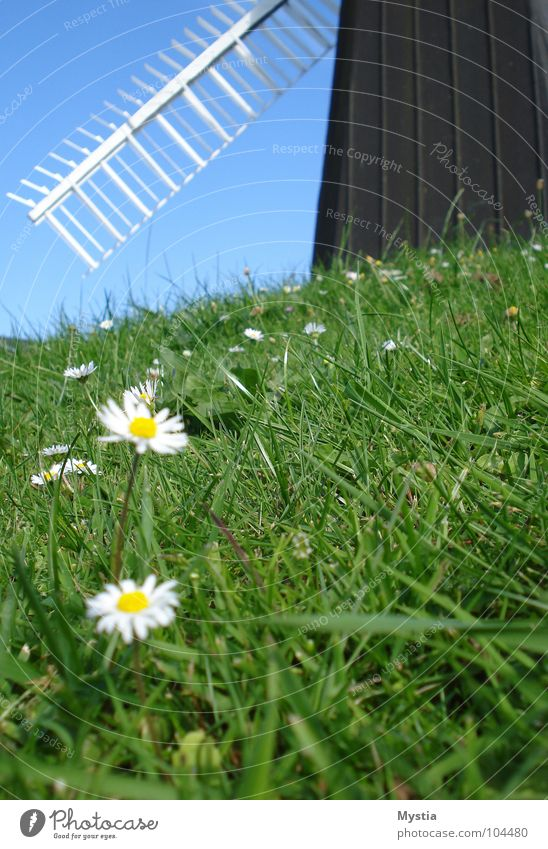 The wind, the wind Meadow Windmill Green Flower White Hill Grass Building Historic Sky Wing Nature
