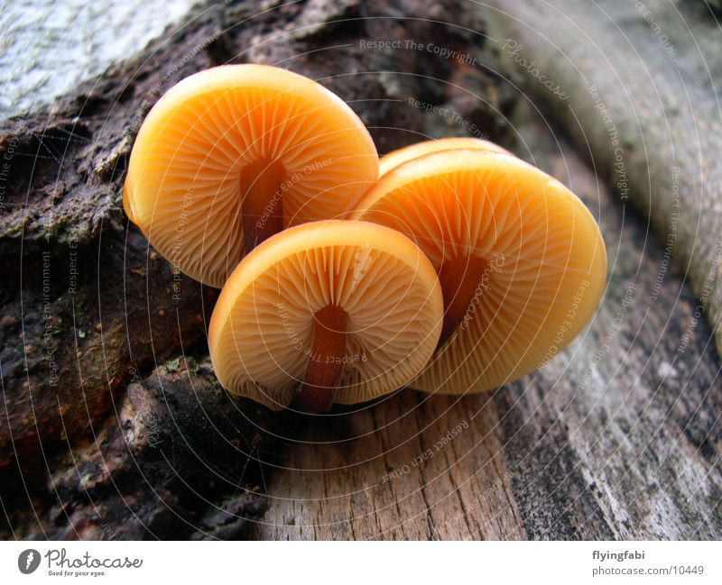 Nature Tree Mushroom Disk Oak tree Beech tree Spore Seed