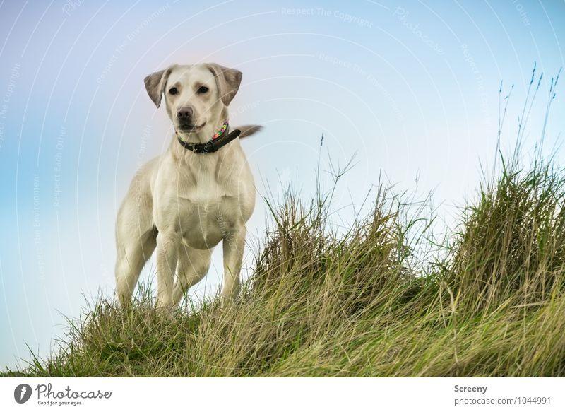 Dog Sky Nature Plant Landscape Animal Autumn Coast Grass Elegant Power Stand Wait Esthetic Observe Lakeside