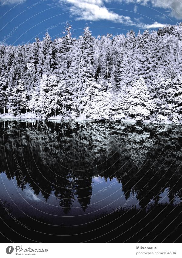 Water Sky White Tree Ocean Blue Winter Clouds Forest Cold Snow Lake Ice Coast Wet Fir tree