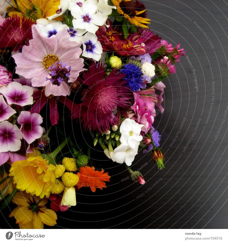 little flowers Multicoloured Exterior shot Detail Copy Space right Neutral Background Shallow depth of field Joy Table Mother's Day Birthday Spring Flower