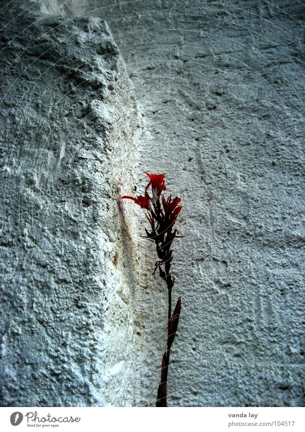 Nature Beautiful White Flower Plant Red Nutrition Loneliness Wall (building) Blossom Wall (barrier) Grief Transience Stalk Distress Plaster
