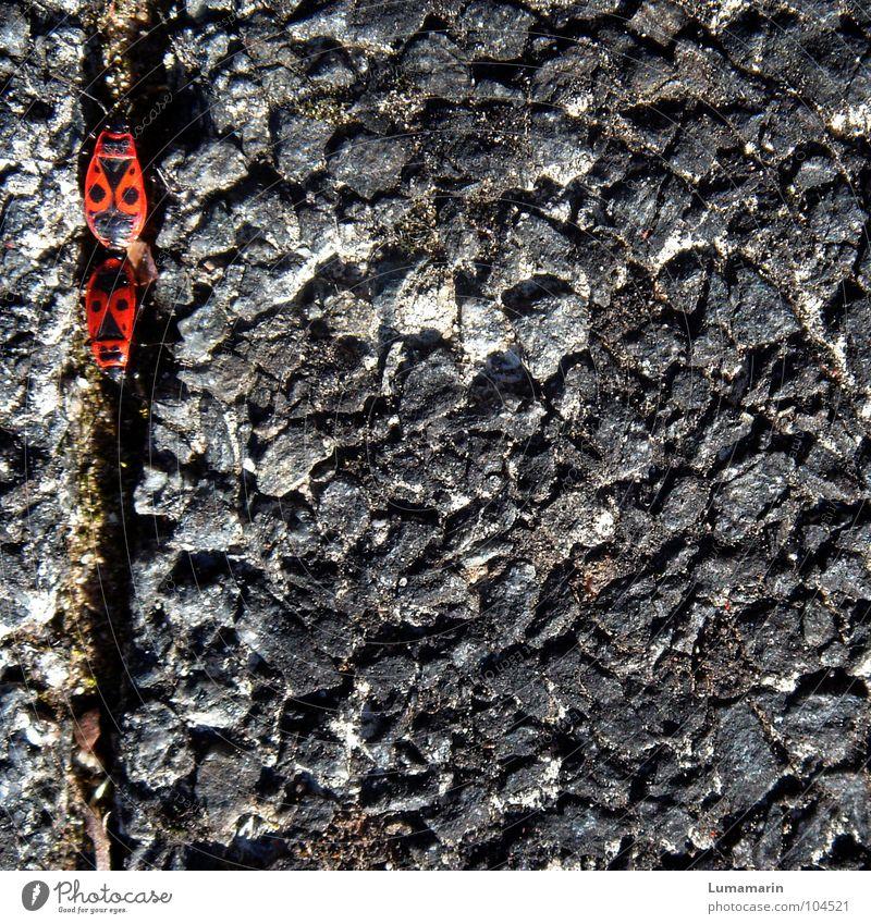 Red Summer Black Gray Stone Line Pair of animals Transport Empty Floor covering Connection Cobblestones Partner Seam Paving stone