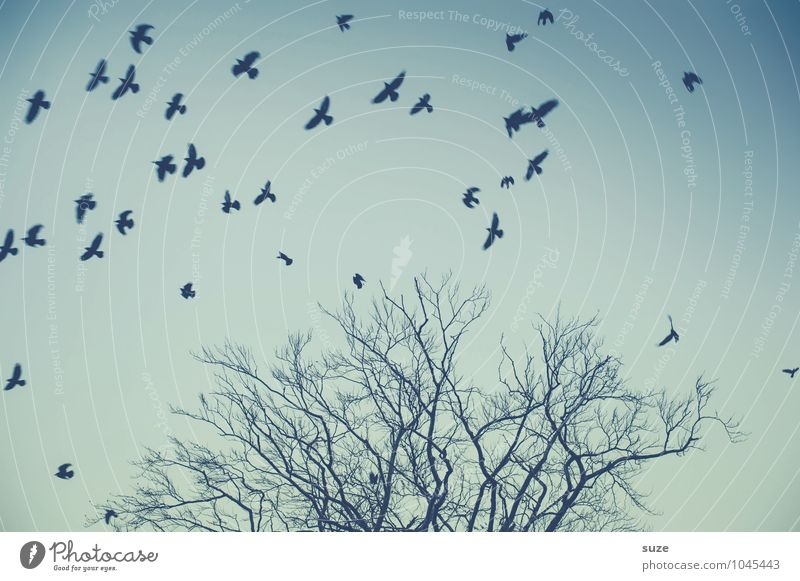 something is always Environment Nature Animal Air Sky Cloudless sky Tree Wild animal Bird Flock Movement Flying Fantastic Blue Moody Sadness Dangerous Stress