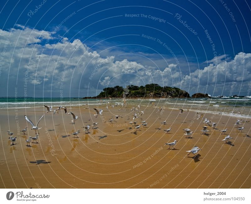 Nature Ocean Beach Animal Bird Coast Island Seagull Australia