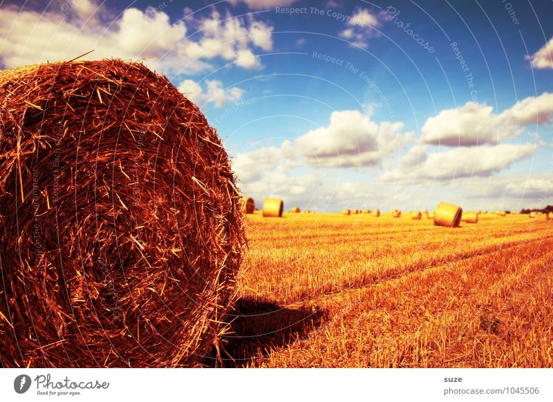 leading part Summer Environment Nature Landscape Sky Clouds Climate Beautiful weather Warmth Field Blue Yellow Gold Coil Bale of straw Harvest Cornfield