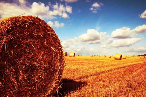 Sky Nature Blue Summer Landscape Clouds Environment Yellow Warmth Autumn Horizon Field Gold Climate Beautiful weather Grain