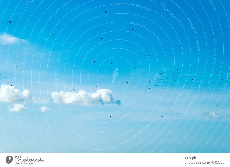 Sky Nature Summer Landscape Clouds Animal Freedom Flying Bird Wild Feather Wing Beautiful weather Story Ease Beak