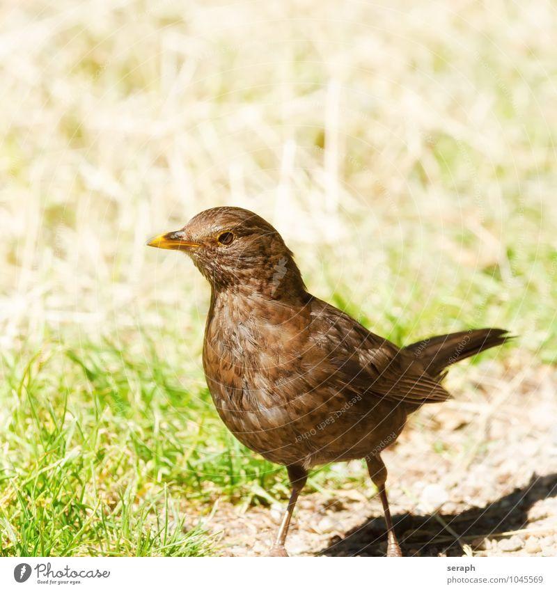 Blackbird Woman Nature Animal Environment Eyes Bird Wild Stand Feather Wing Vantage point Observe Near Beak Ornithology