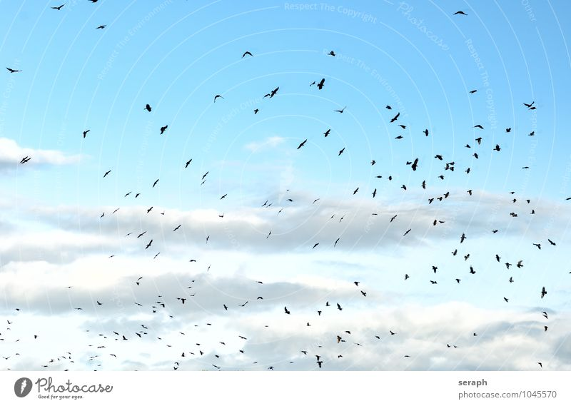 Sky Nature Clouds Animal Flying Group Bird Air Wild Feather Wing Many Story Beak Flock Wilderness