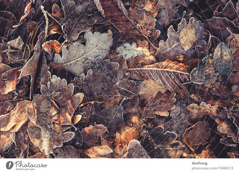 Nature Plant Colour White Leaf Calm Winter Cold Autumn Senior citizen Natural Death Brown Orange Wild Contentment