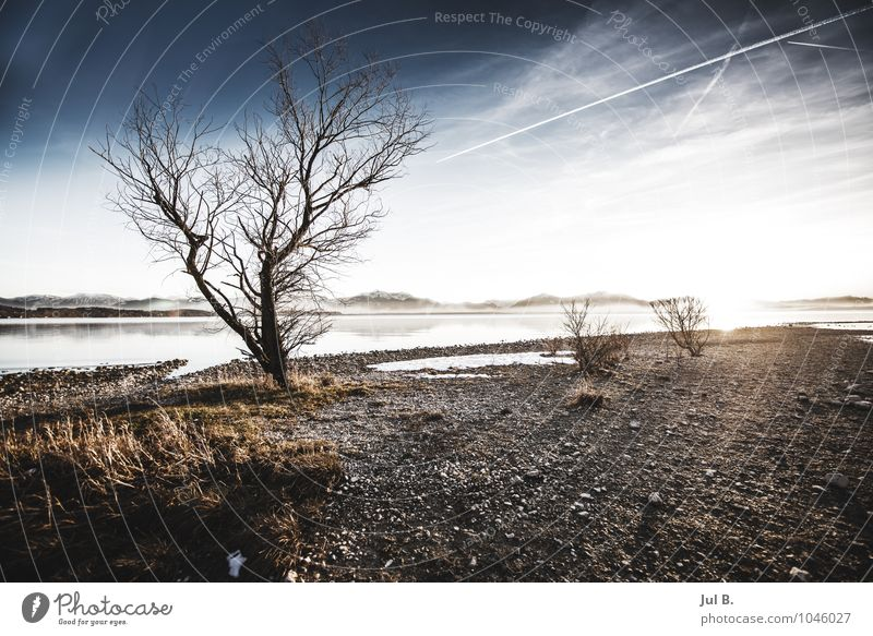 100! :) Environment Nature Landscape Air Water Sky Winter Climate Weather Beautiful weather Tree Emotions Moody Authentic Lake Chiemsee Traunstein Bavaria