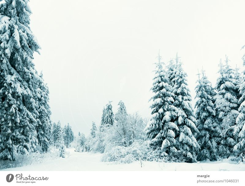 Winter feeling, a snowy landscape Environment Nature Landscape Plant Animal Water Sky Climate Ice Frost Snow Snowfall Tree Foliage plant Spruce forest Fir tree