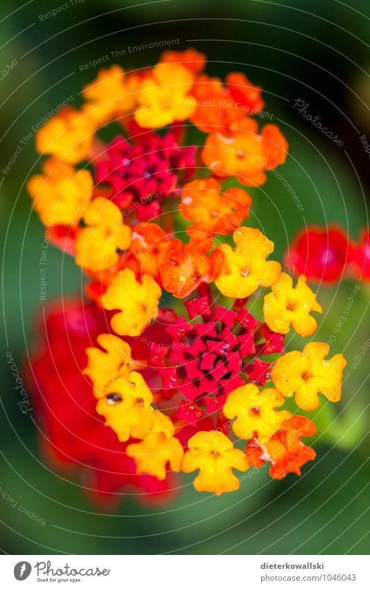 Plant Beautiful Red Flower Yellow Blossom Garden Illuminate Majorca Exotic Wild plant