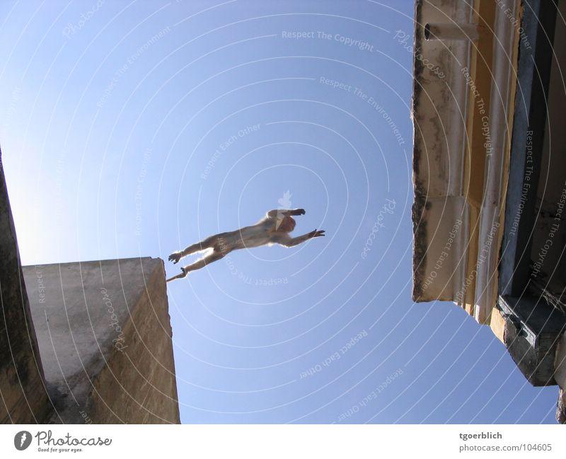 Joy Jump Hope Roof Target Forwards Brave Dynamics India Mammal Monkeys Temple House of worship Range