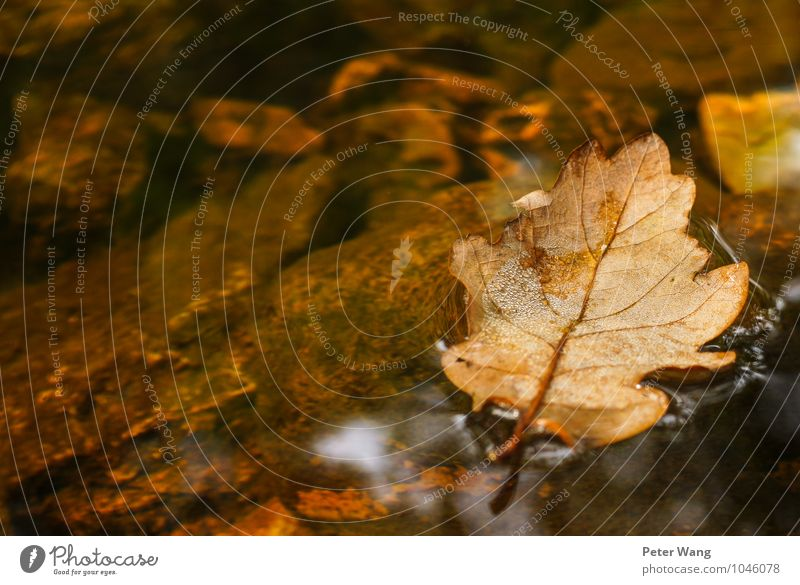 Autumn raft Freedom Nature Water Climate Plant Tree Leaf Foliage plant Forest Brook River Ravages of time Old Swimming & Bathing To fall Faded Broken