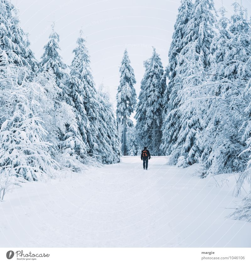 Human being Nature Vacation & Travel Man Tree Calm Winter Forest Cold Adults Movement Snow Lanes & trails Healthy Snowfall Masculine