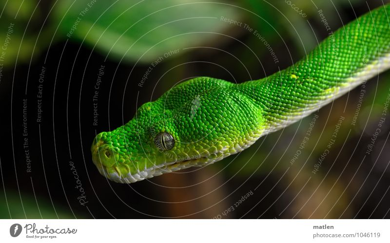 Plant Green White Animal Brown Animal face Hover Snake Scales
