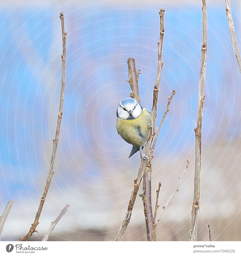 Look at this. . . Nature Winter Plant Bushes Garden Animal Bird 1 Looking Love of animals Colour photo Exterior shot Day Animal portrait Front view