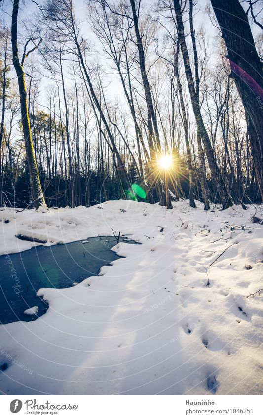 winter forest Environment Nature Landscape Air Sky Sunrise Sunset Sunlight Winter Weather Beautiful weather Ice Frost Snow Plant Tree Bushes Wild plant Forest