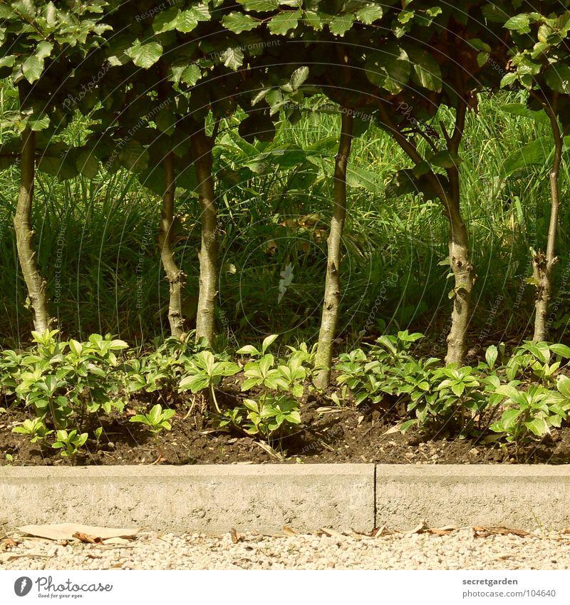 White Tree Green Summer Grass Garden Park Arrangement Corner Bushes Climate Row Tree trunk Gravel Hedge