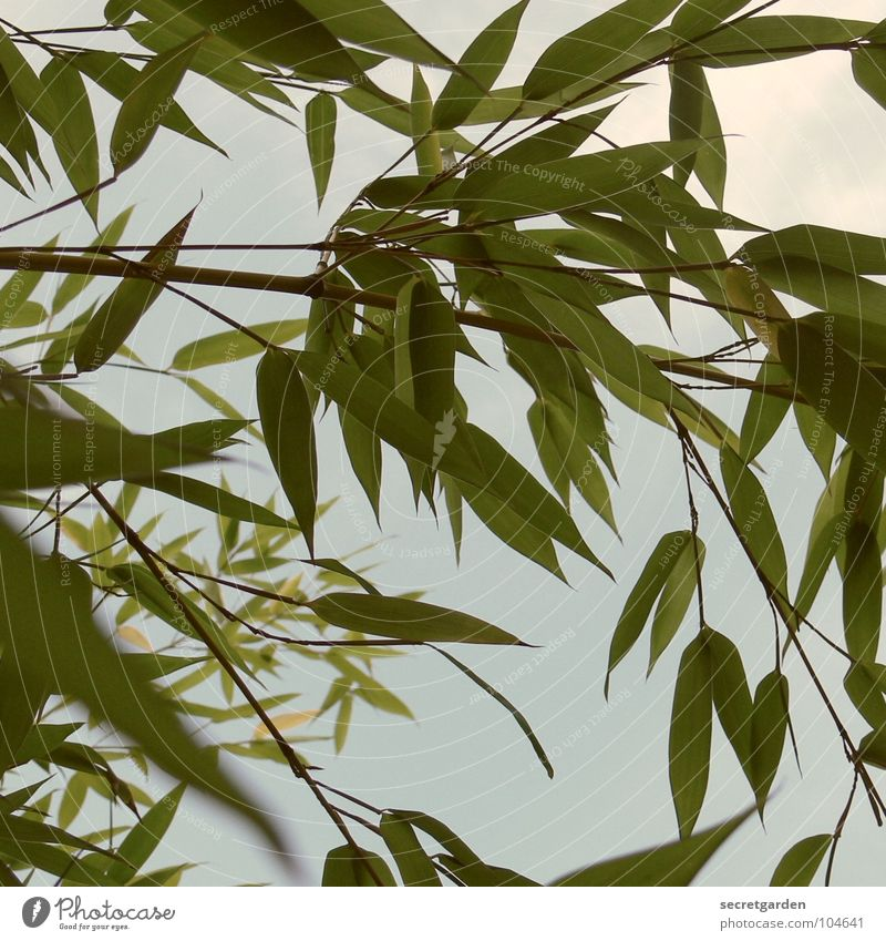 bamboo Green Worm's-eye view Withdraw Summer Back-light Park Garden Bamboo stick Sky Shadow