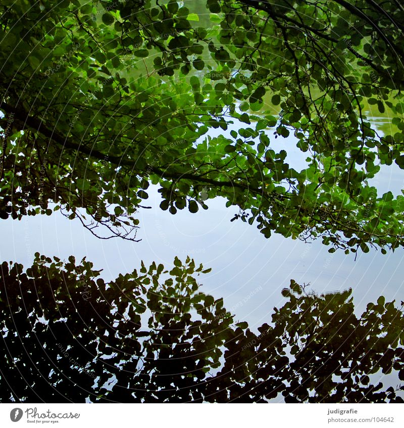 Contrarily uniform Tree Reflection Leaf Pond Lake Surface of water Mirror 2 Green Gray Environment Plant Water Branch Double exposure Nature
