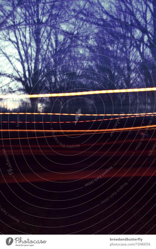 experimental Winter Tree Park Movement Blue Perspective Colour photo Exterior shot Experimental Deserted Copy Space bottom Twilight Long exposure Blur