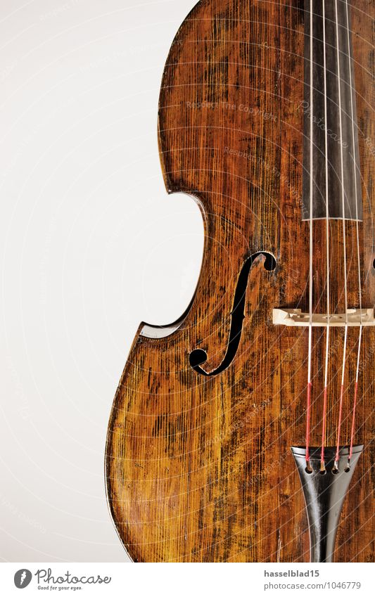 Calm Wood Leisure and hobbies Music Harmonious Workshop Luxury Musical instrument Musical instrument string Wood grain Violin Classical Double bass