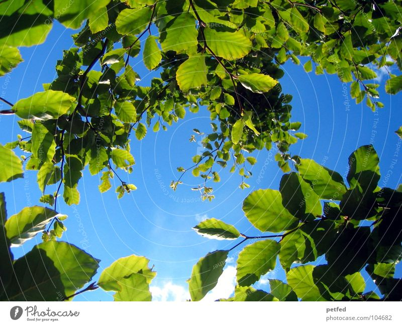 In the Garden of Eden VIII Tree Green Leaf Summer Spring Mount Eden Deities Yellow Clouds Blue Sky Branch Tree trunk Weather God Joy Nature