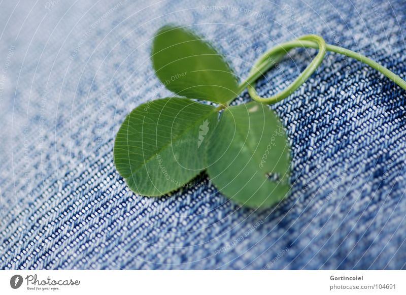 Green Plant Happy Jeans Pants Cloth Stalk Blade of grass Knot Optimism Clover Cloverleaf Good luck charm Weed Four-leafed clover Trifoliate