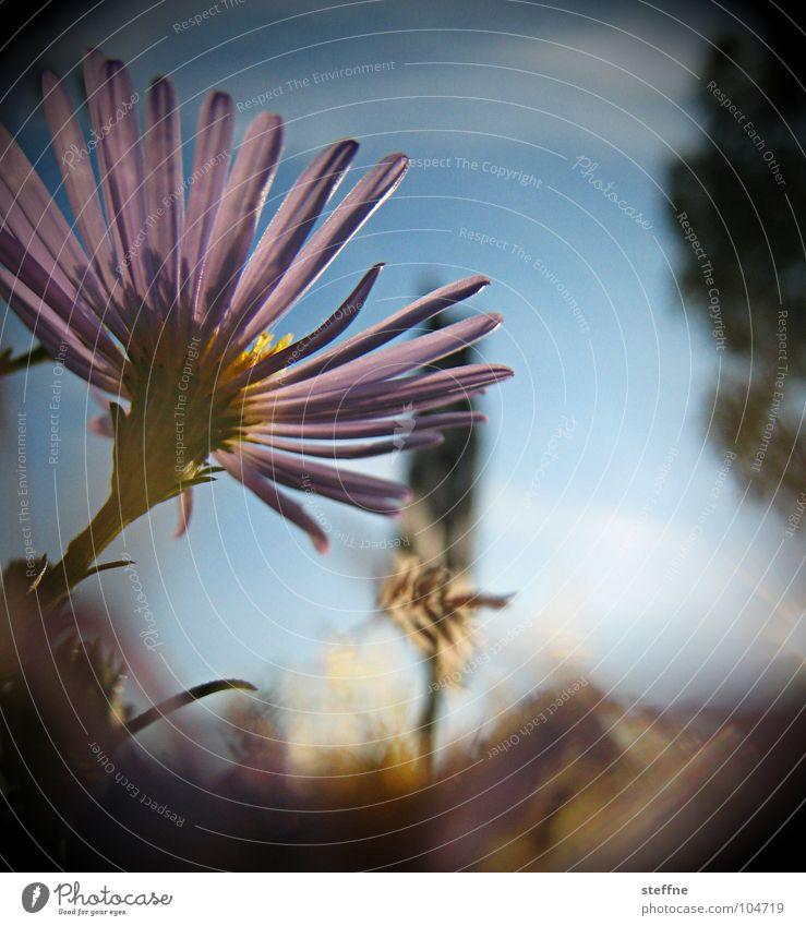 Sky Sun Flower Blue Black Blossom Violet