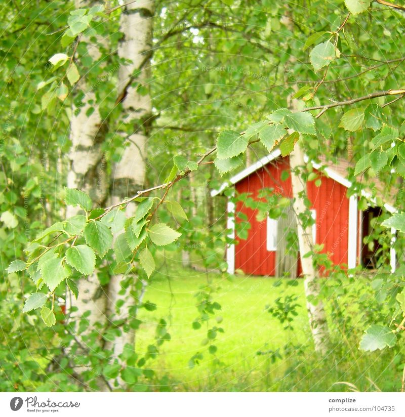 Nature Green Plant Summer Tree Red Leaf Forest Meadow Grass Idyll Branch Lawn Hut Twig Scandinavia