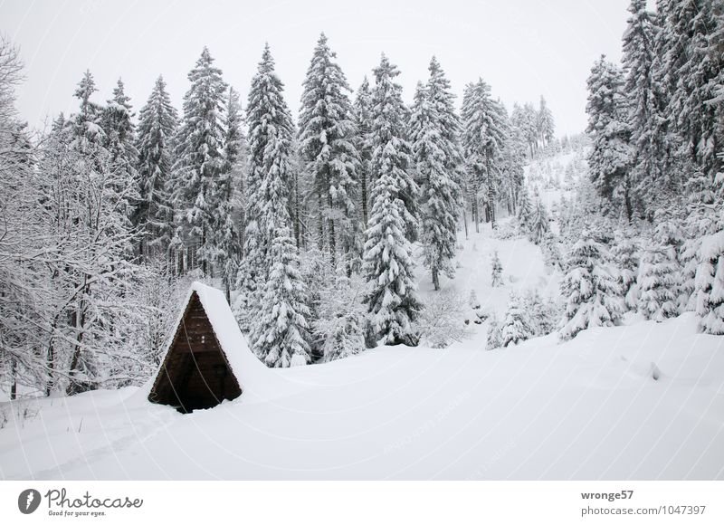 winter forest Nature Landscape Winter Snow Tree Coniferous forest Coniferous trees Spruce forest Forest Mountain Harz National Park White Snowfall Snowscape
