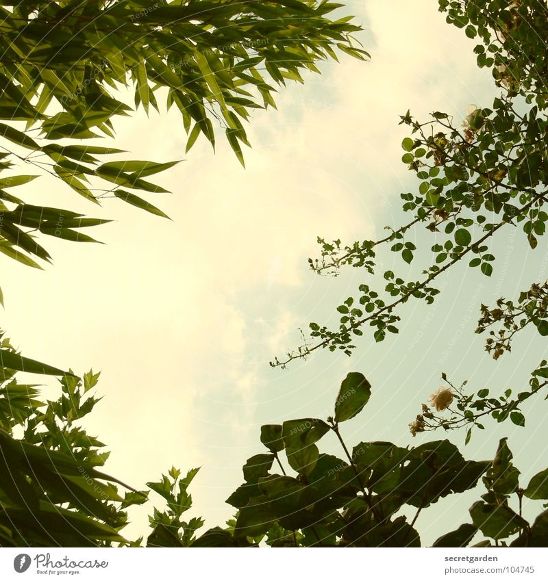 Nature Sky Sun Green Summer Leaf Clouds Garden Park Lie Bamboo stick Withdraw