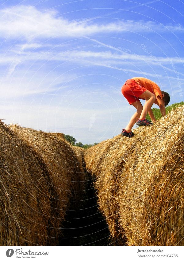 From the blue mountains... Hay bale Hay roll Coil Child Infancy Climbing Field Boy (child) Agriculture Summer Autumn Jump Dexterity Playing Playground To board