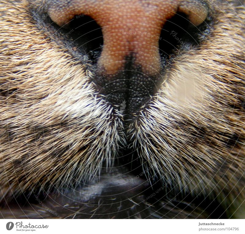 Wet Cat Snout Damp Frontal Pet Domestic cat Pelt Near Slaver Nostril Whisker Purr Meow Concentrate Mammal Power Force Nose cat's nose furry Hair. hairy