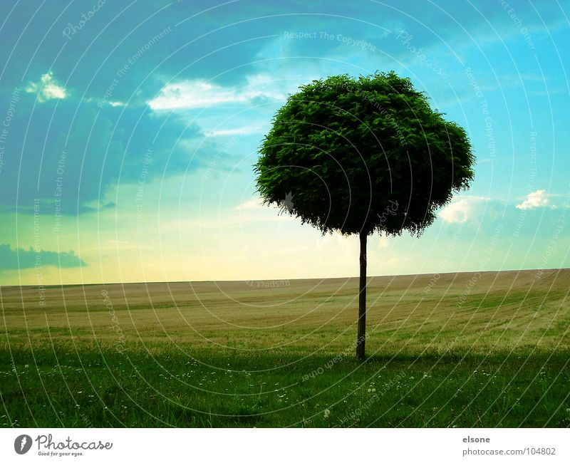 Sky Nature Blue Green Summer Tree Flower Loneliness Leaf Calm Far-off places Emotions Meadow Grass Natural Healthy