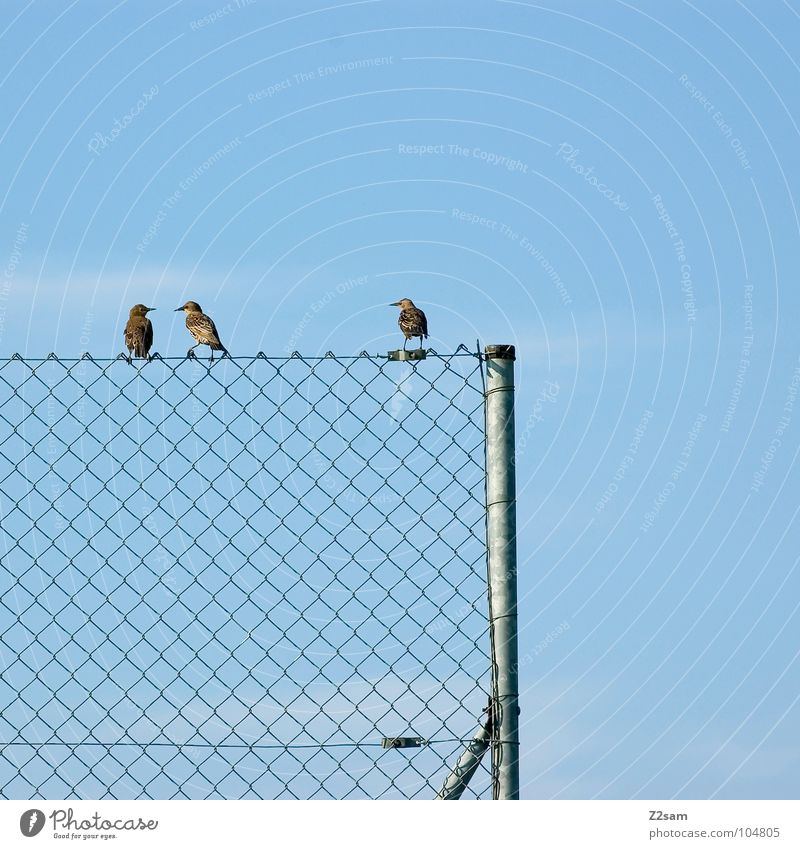Nature Sky Blue Clouds Animal Relaxation Friendship Contentment Bird Flying Rope Sit Multiple Cable Simple 4
