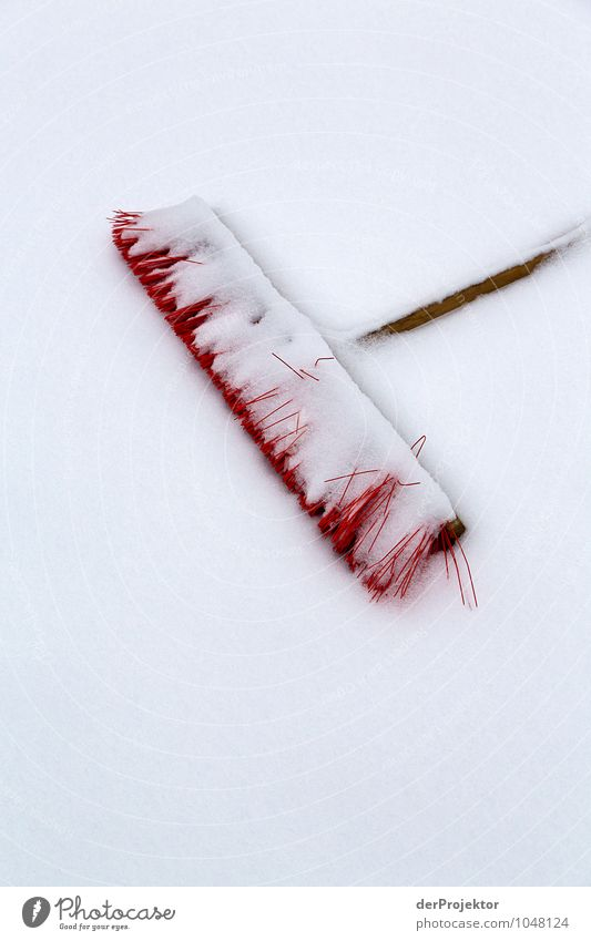 Nature White Red Landscape Winter Cold Environment Emotions Snow Garden Park Weather Ice Clean Cool (slang) Cleaning